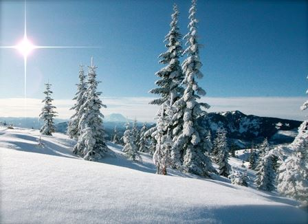 Tami Asars Photos - Snow-Covered Douglas Fir Landscape